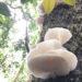 nấm rừng đà lạt
